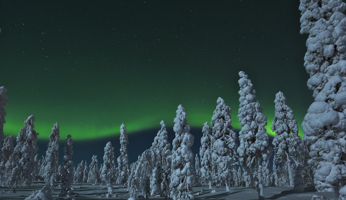 Revontulet ja kuutamon valaisema metsä, Rovaniemi.